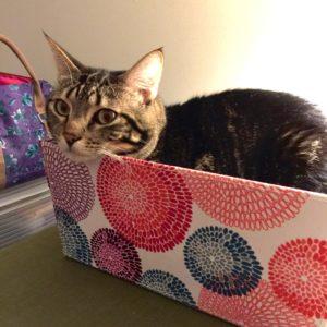Kitteh In-Box