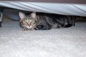 Hidden Tabby