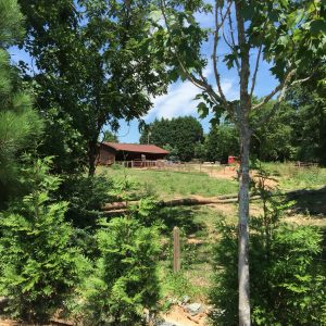 summertime farmyard