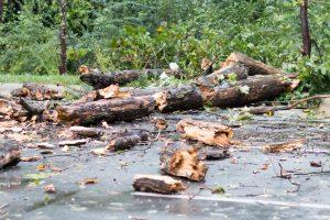 broken downed tree