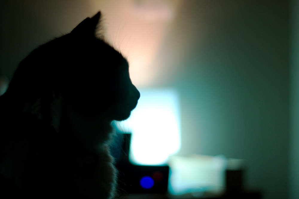 It's ALWAYS Cat Day Around Here 😸