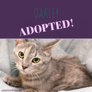 Oakley-ADOPTED