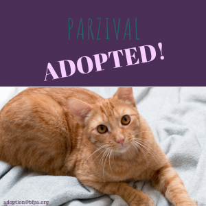 Parzival-ADOPTED