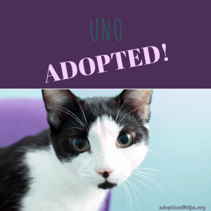 Uno-ADOPTED