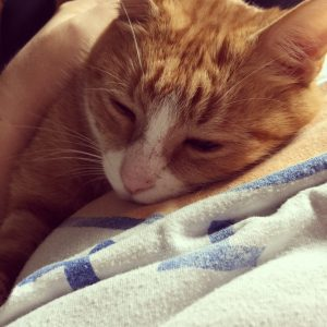 Cuddly Clancy